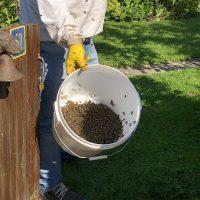Ontsnapt bijenvolk weer terug bij de baas AvR